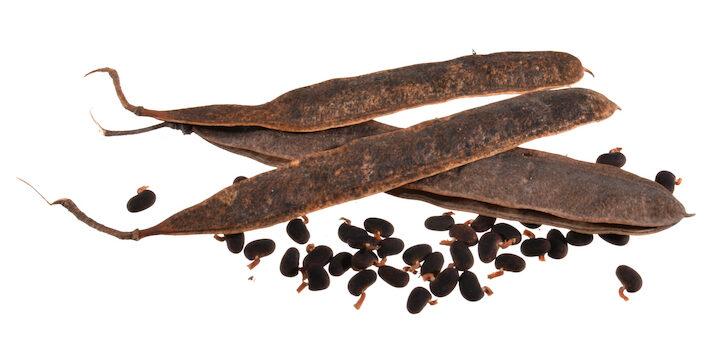 acacia seeds