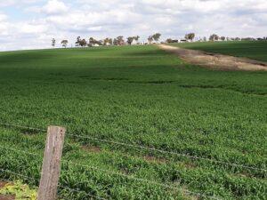 australian health boosters farmland